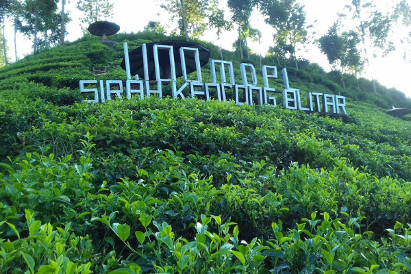 Kebun Teh Jawa Timur